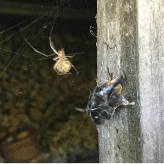 Spinne und Hummel