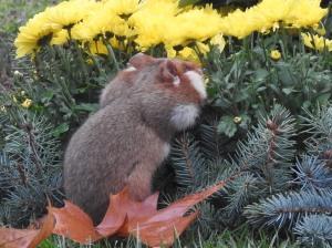 Hamster und Blumen