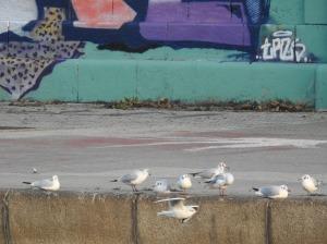 Möwen vor Graffiti