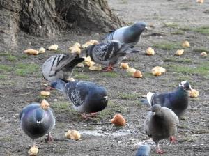 Taubenfütterung im Park