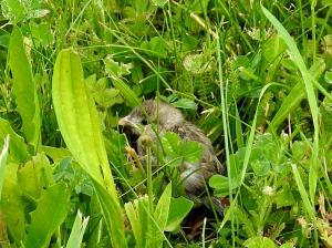 Kleiner Spatz im Gras