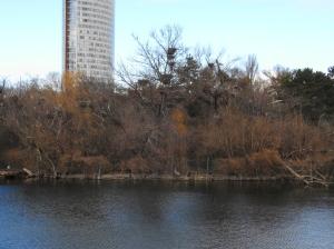 Graureiherinsel im Wasserpark